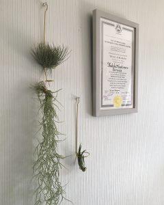 エアプランツ・植物