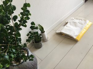 スタジオの植物