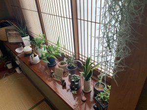 studio sarada植物たち