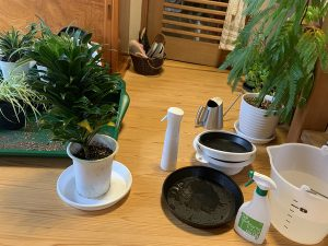 sutudio sarada植物メンテ