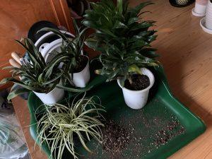 studio sarada植物2021