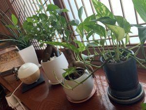 studio sarada植物
